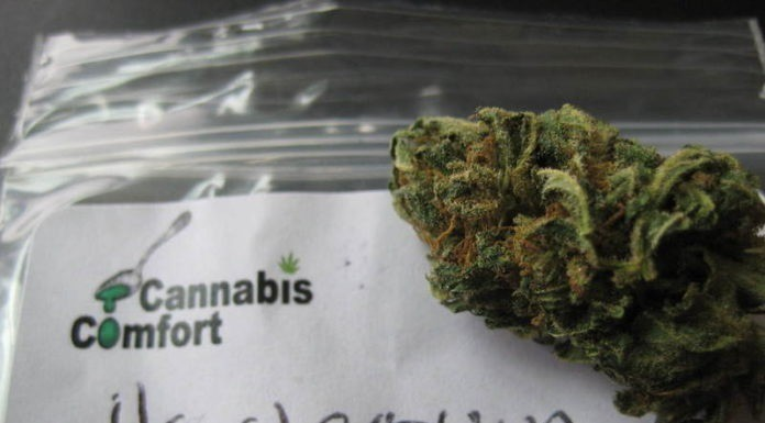 cannabis strains for beginners south africa