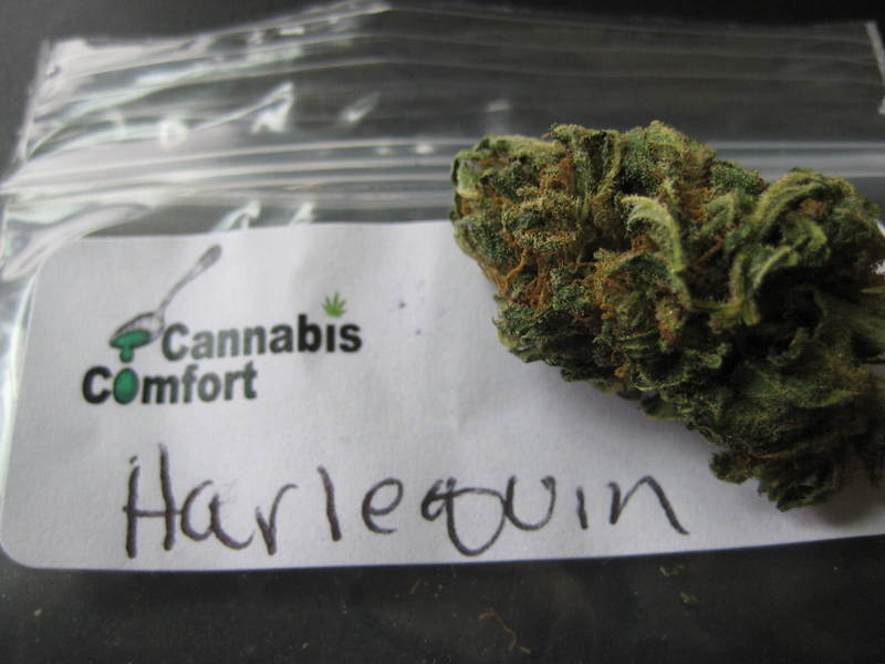 Cannabis Strains for Beginners | Weed Culture